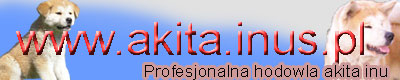 http://www.akita.inus.pl